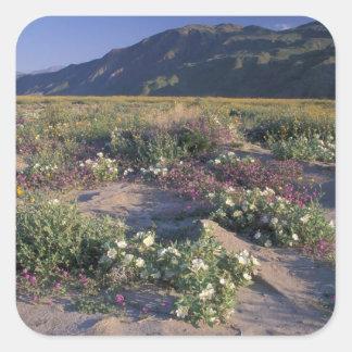 Califorinia, SP del desierto de Anza-Borrego, Pegatina Cuadrada