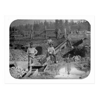 ~ California 1850 de los mineros de la fiebre del Postales