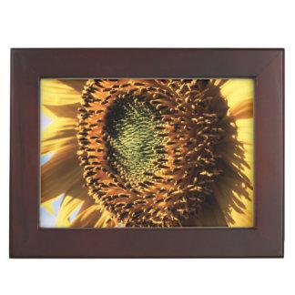 California, A Mammoth Sunflower (Helianthus) 1 Memory Box