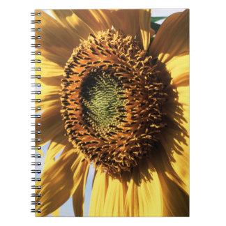 California, A Mammoth Sunflower (Helianthus) 1 Note Books