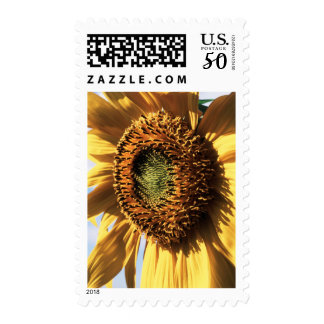 California, A Mammoth Sunflower (Helianthus) 1 Postage