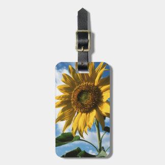 California, A Mammoth Sunflower (Helianthus) 2 Bag Tag