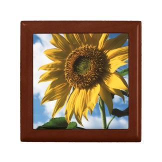 California, A Mammoth Sunflower (Helianthus) 2 Jewelry Box