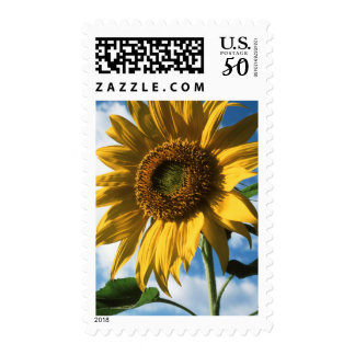 California, A Mammoth Sunflower (Helianthus) 2 Postage