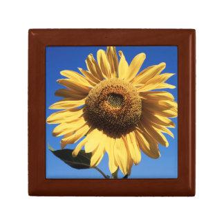 California, A Mammoth Sunflower (Helianthus) 3 Gift Box