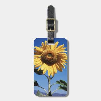 California, A Mammoth Sunflower (Helianthus) 3 Luggage Tag