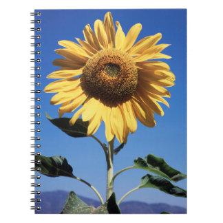 California, A Mammoth Sunflower (Helianthus) 3 Spiral Notebook