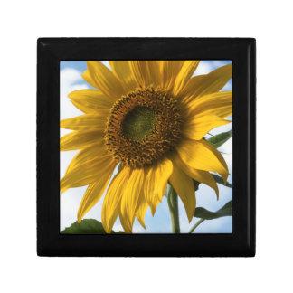 California, A Mammoth Sunflower (Helianthus) 4 Gift Box