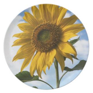 California, A Mammoth Sunflower (Helianthus) 4 Melamine Plate