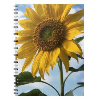 California, A Mammoth Sunflower (Helianthus) 4 Notebook