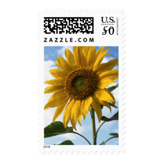 California, A Mammoth Sunflower (Helianthus) 4 Postage