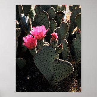 California, Anza Borrego Desert State Park 1 Poster