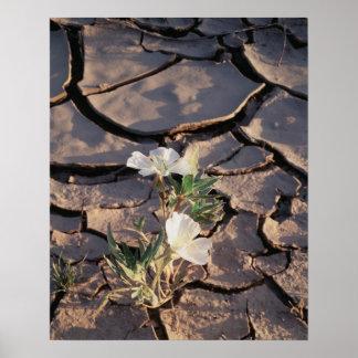 California, Anza Borrego Desert State Park, Dune 1 Poster
