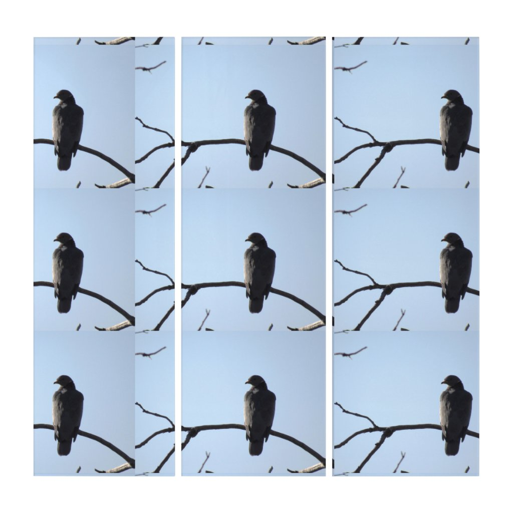 California Band Tail Pigeon Collage Triptych