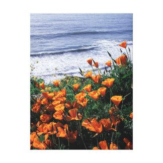 California, Big Sur Coast, California Poppy Canvas Print