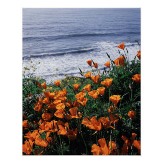 California, Big Sur Coast, California Poppy Poster