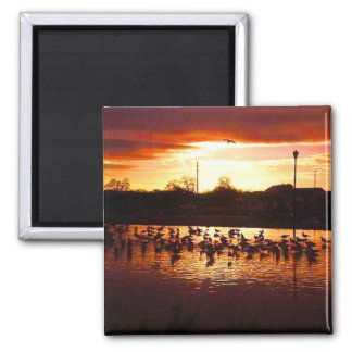 California birds with sunset magnet