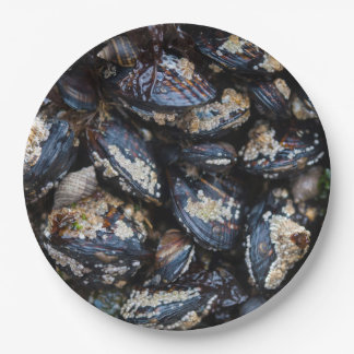 California Blue Mussels growing on rock in Bandon 9 Inch Paper Plate