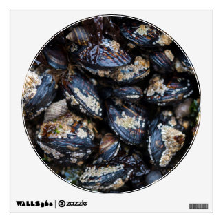California Blue Mussels growing on rock in Bandon Wall Decal