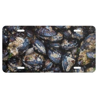California Blue Mussels,Rocky Pacific Coast Oregon License Plate