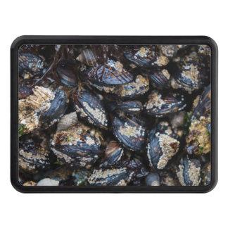 California Blue Mussels,Rocky Pacific Coast Oregon Trailer Hitch Cover