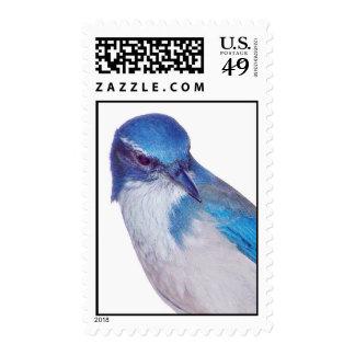 California Bluebird stamp