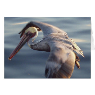 California Brown Pelican Cards