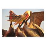 California Brown Pelicans Custom Invitation