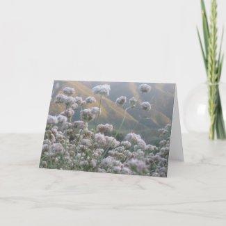 California Buckwheat Card