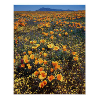 California, Cleveland National Forest Poster