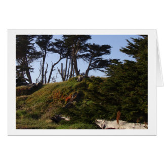California Coast Monterey Pines Greeting Card