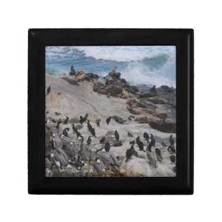 California Coast Natural Wildlife Trinket Box