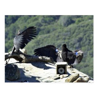 California condors post cards