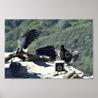 California condors print