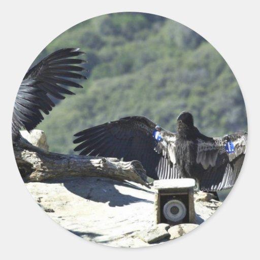 California condors sticker
