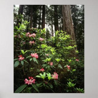 California, Del Norte Coast Redwoods State Park Poster