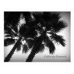 California Dreamin' Palm Trees Postcard