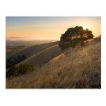 California East Bay Hills in Summer postcard
