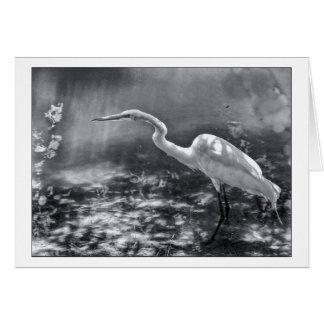 California Egret Card