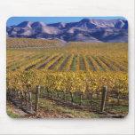 California, el condado de San Luis_obispo, valle d Alfombrillas De Ratones