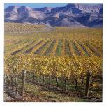 California, el condado de San Luis_obispo, valle d Azulejo Cuadrado Grande