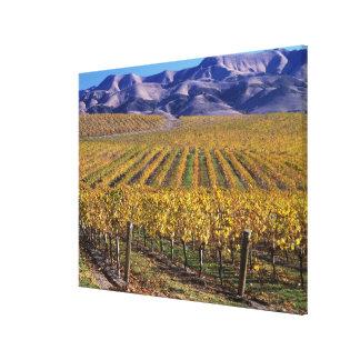 California, el condado de San Luis_obispo, valle Lona Envuelta Para Galerias