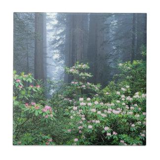 California en la floración tejas  cerámicas