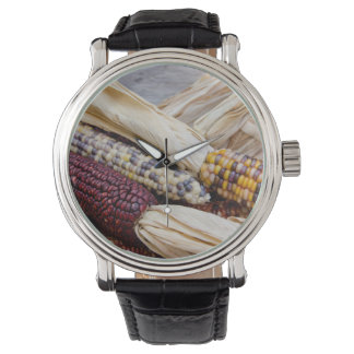 California. Fall Harvest Colorful Indian Corn Watch