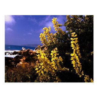 California Floral Coast Postcard