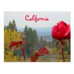 California florecida postal