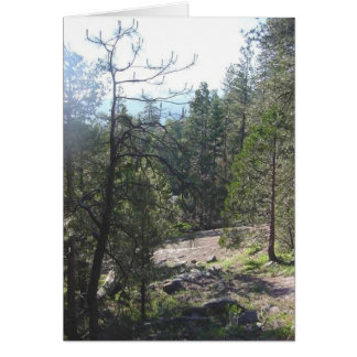 California Forest Greeting Card