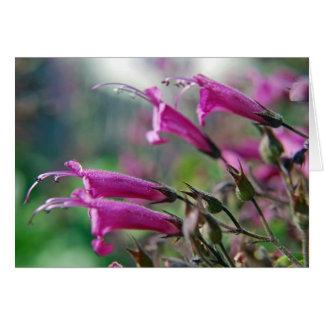 California Fuchsia - Card