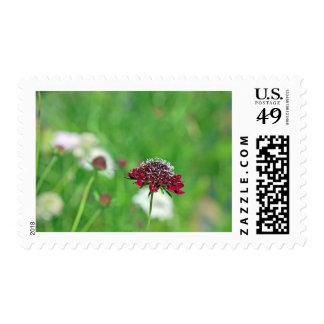 California Garden Postage