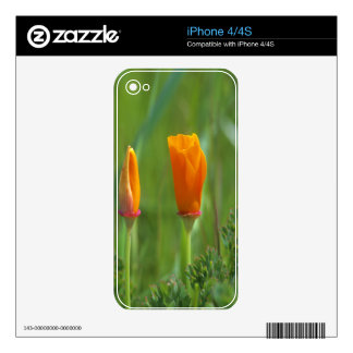 California golden poppies in a green field 2 decals for iPhone 4